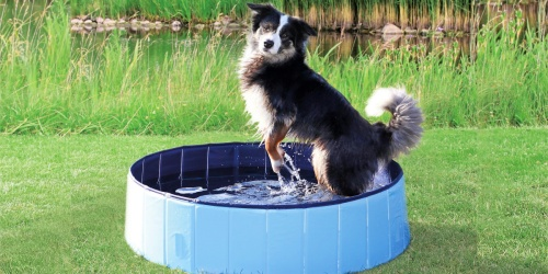 Collapsible Dog Pools from $11 on Chewy.com (Regularly $35)