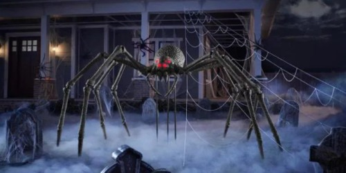 Would You Pay $350 for This Monstrous Hissing Spider?
