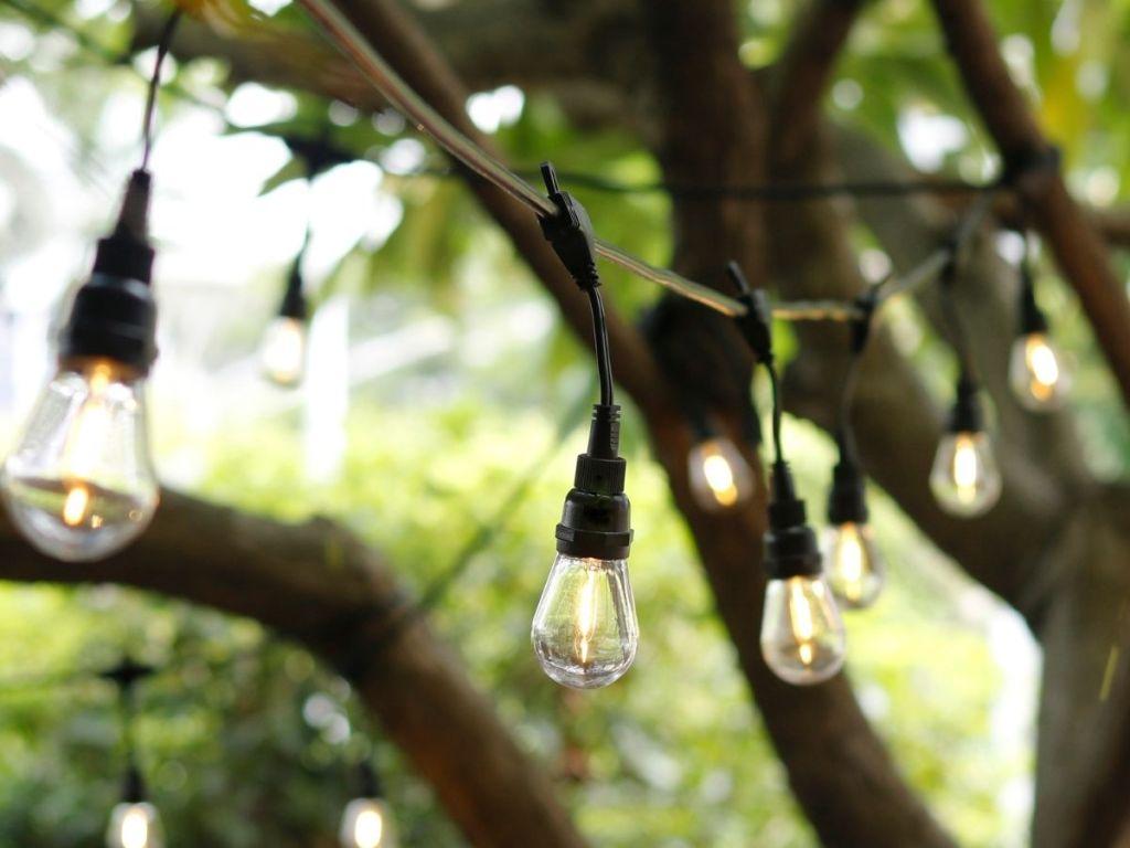 hanging lightbulbs in yard