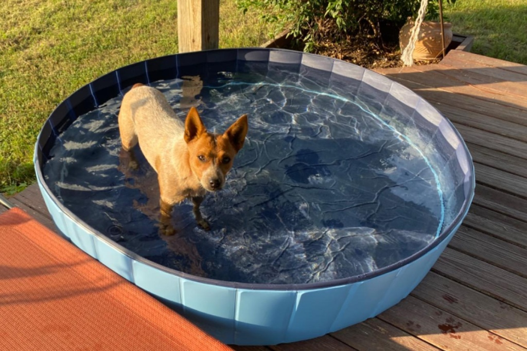 yaheetech blue pet pool