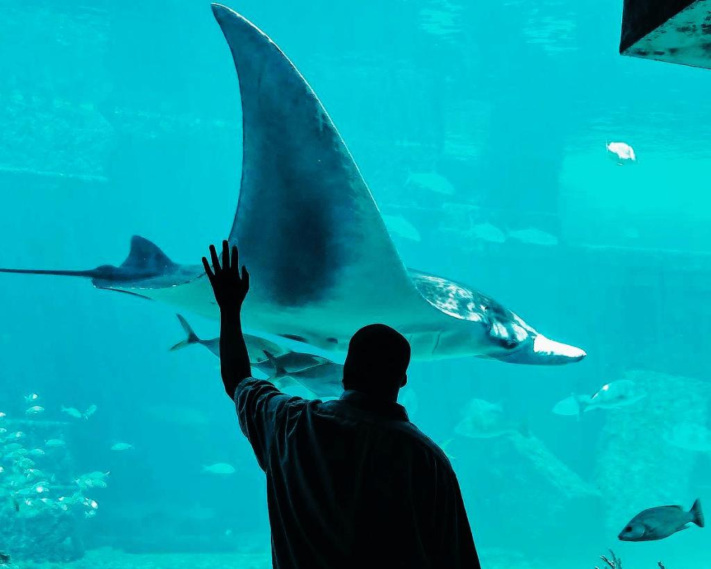 man standing in front of an aquarium