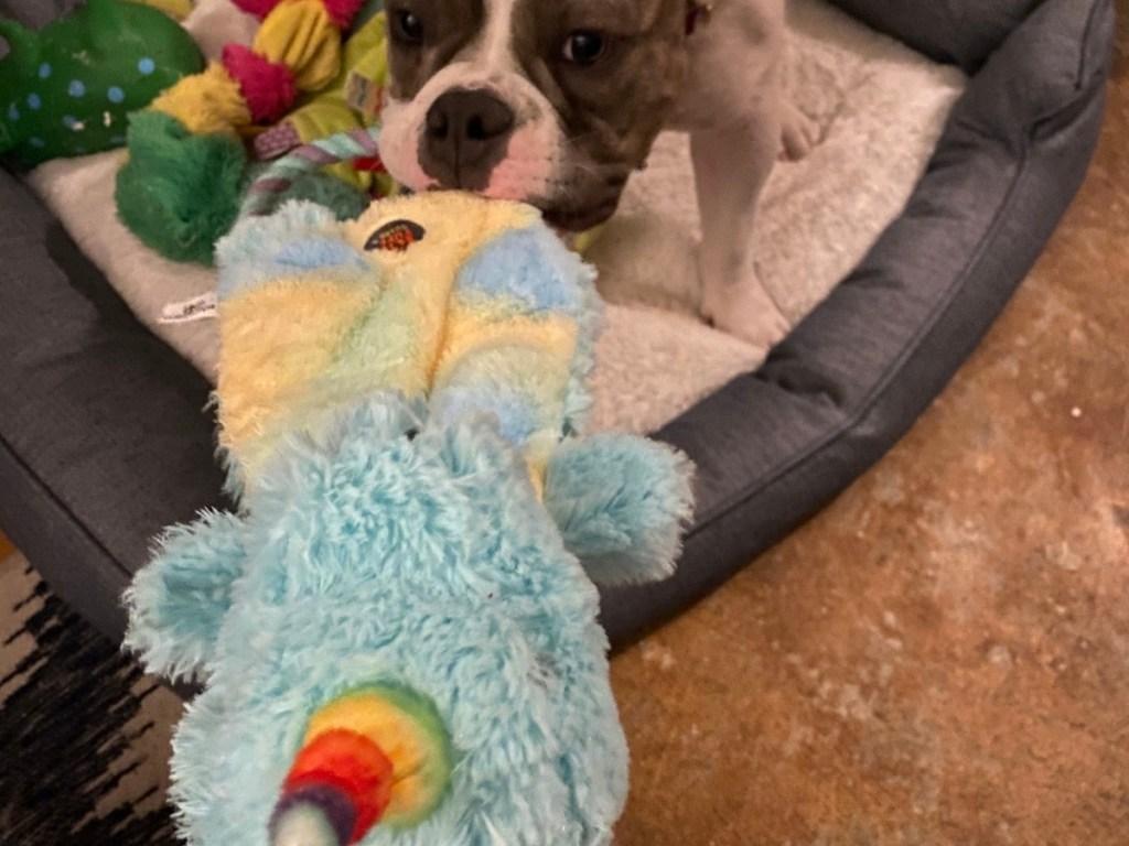 dog with unicorn tug of war toy