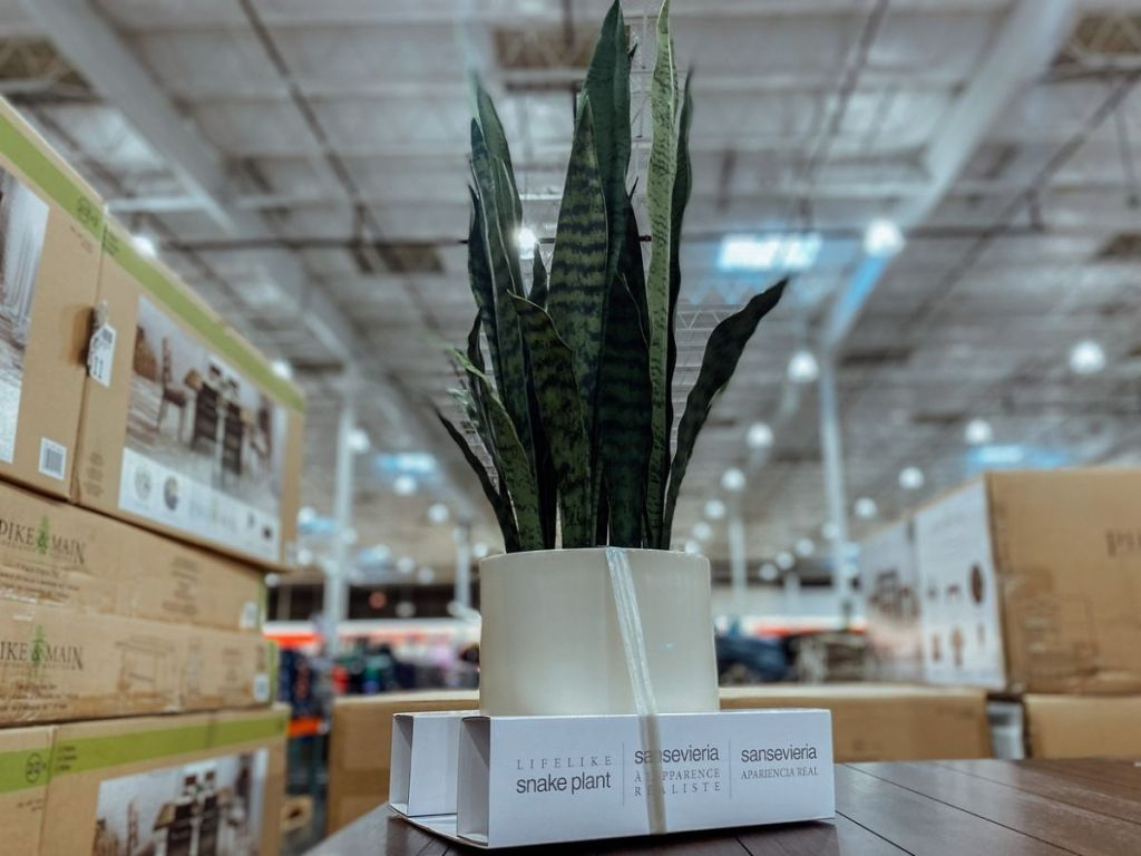 Costco Faux Snake Plant
