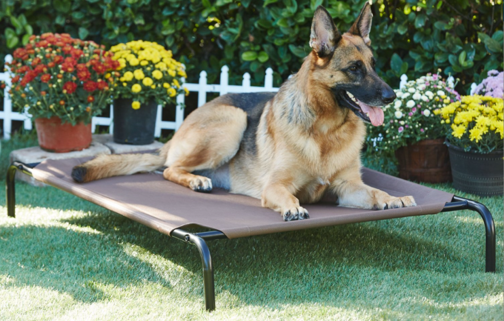 dog sitting on an elevated dog bed