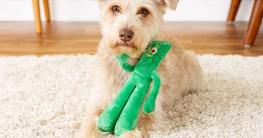 dog with a gumby toy