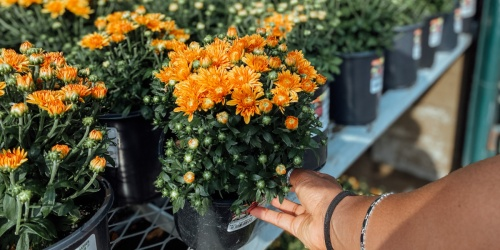 Home Depot Labor Day Sale Live Now | Storewide Savings on Plants, Garden Soil, Charcoal, Grills & More