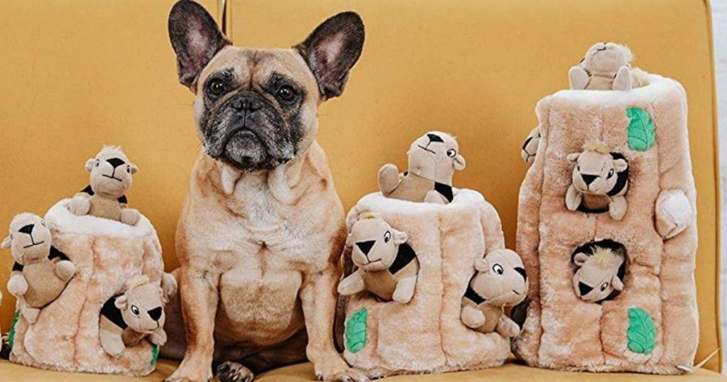 dog sitting next to squirrel toys