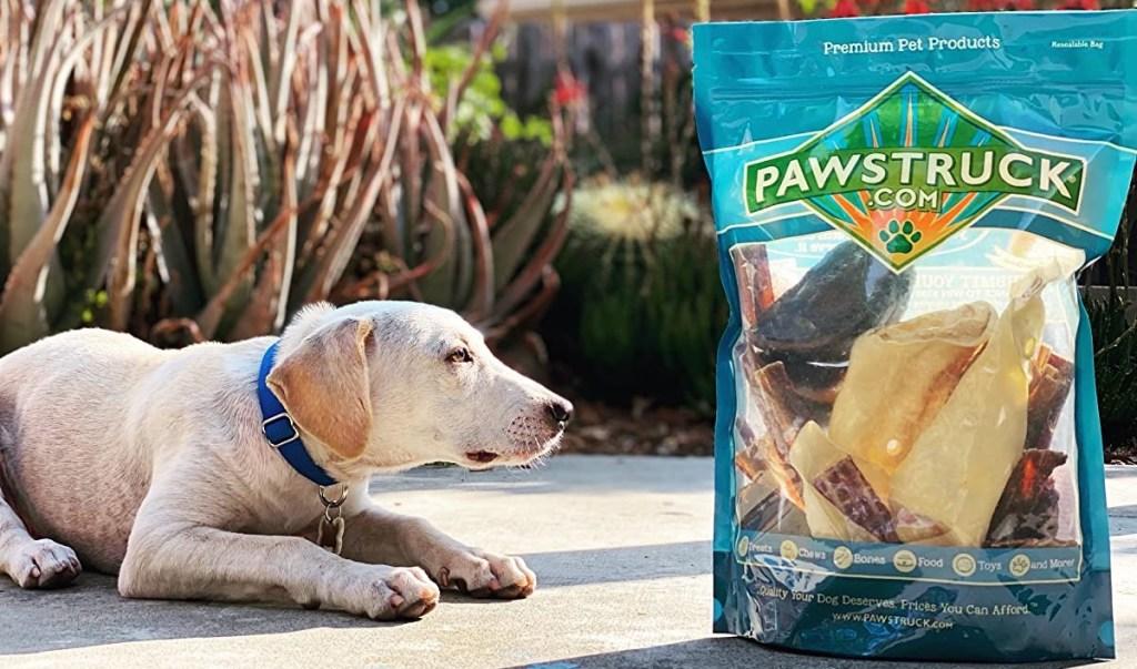dog looking at a bag of treats