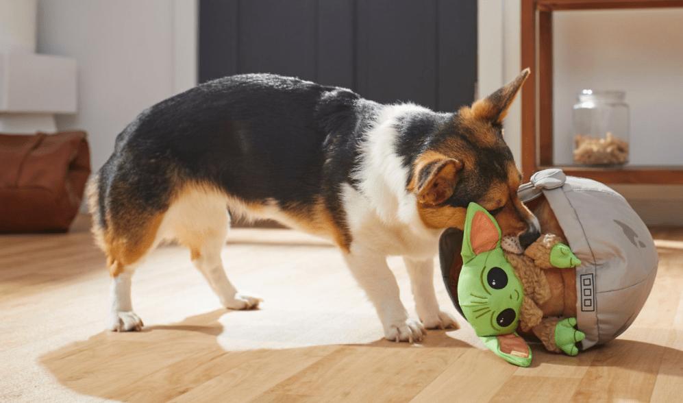 dog playing with a Star Wars Grogu Plush Dog Toy