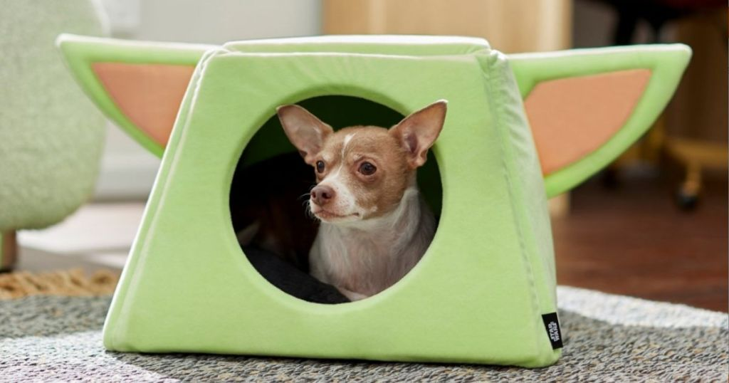 dog in a Star Wars pet bed