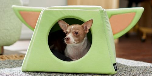 Free $25 Chewy eGift Card w/ $50 Purchase   Save on Star Wars Pet Toys, Storage Items & More
