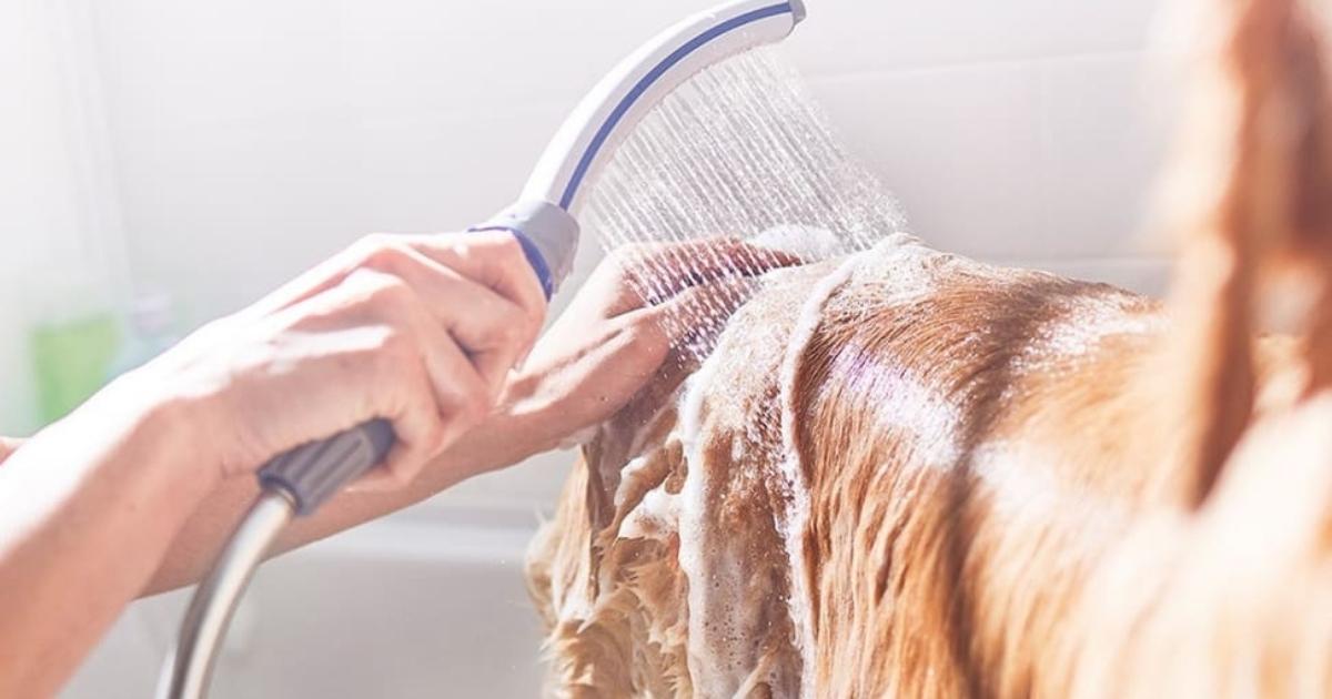 waterpik pet wand pro dog shower attachment