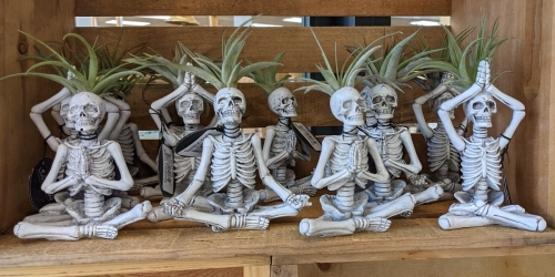 Yoga Skeleton Air Plants are Back at Trader Joe's & They're Only $6.99