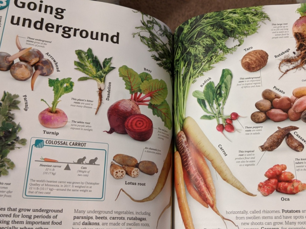 open book with plants and explanations written by them