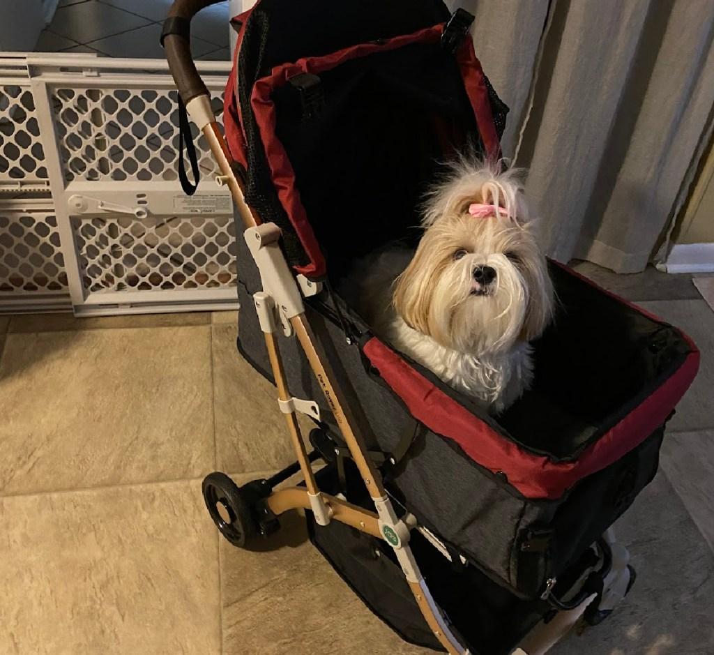 hpz pet in stroller