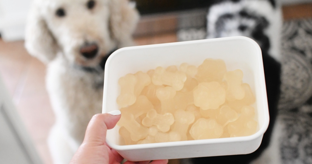 one ingredient frozen dog treats in a container