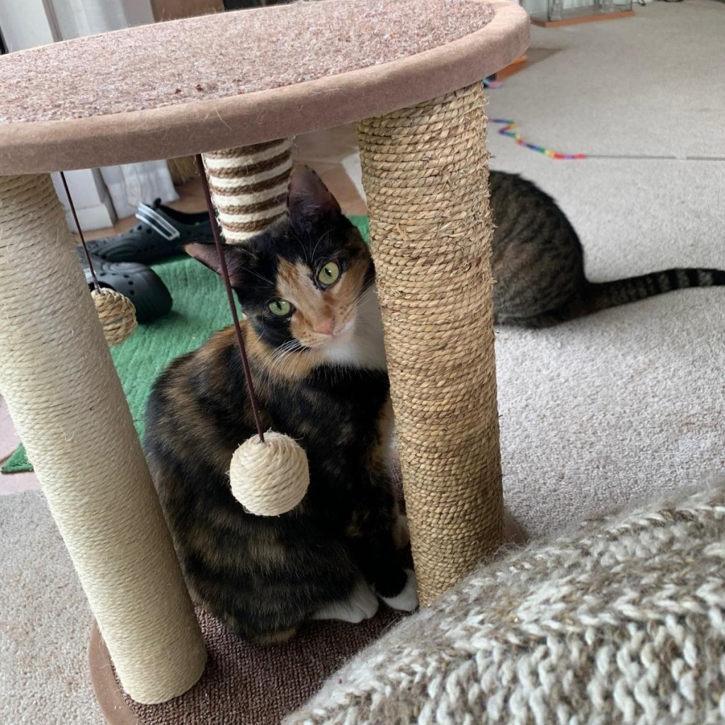 cat inside scratching post play area