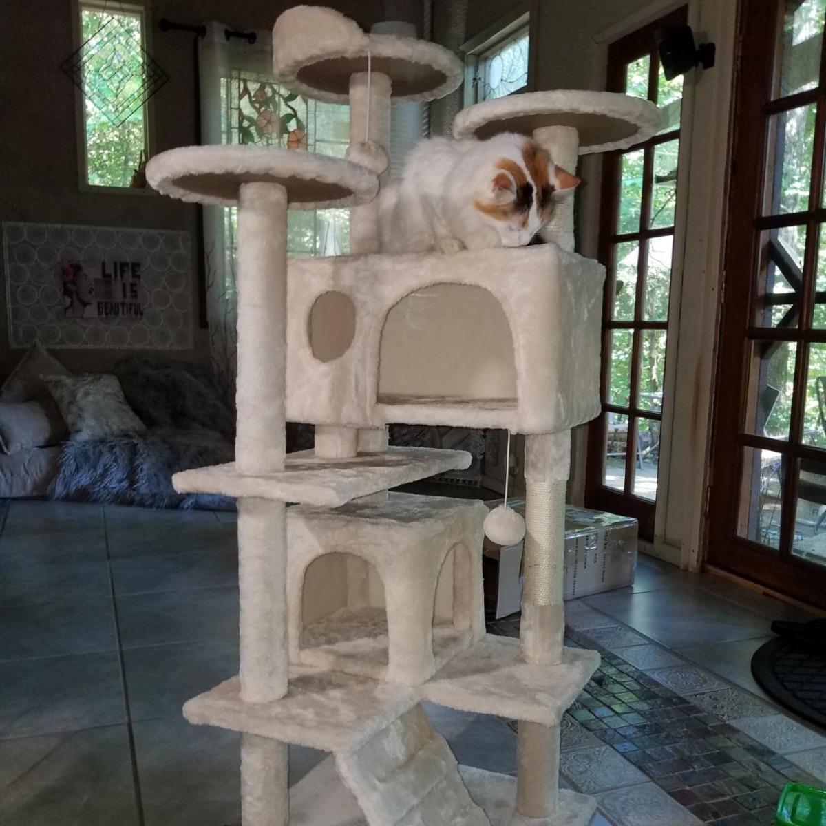 best cat trees on Amazon - cat on beige cat tree
