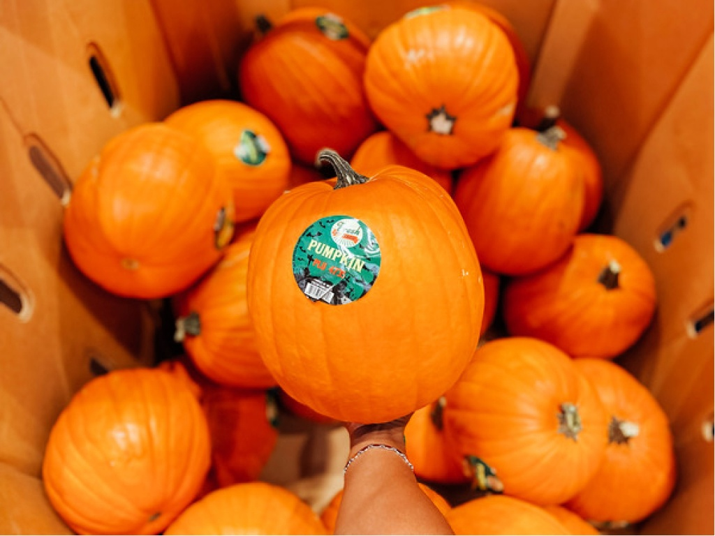Aldi Pumpkins in Bin