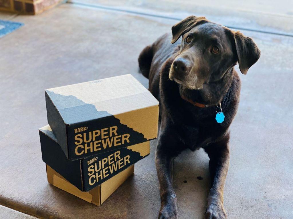 dog sitting next to Bark Box Super Chewer boxes
