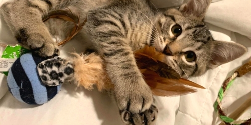 Petlinks Cat Toy 2-Pack Only $2.50 Shipped on Chewy.com (Regularly $7)