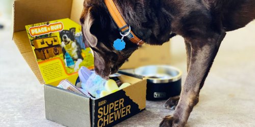 Score a Complimentary YETI Dog Bowl w/ Super Chewer Box Subscription ($40 Value)