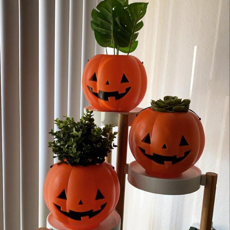 pumpkin buckets with plants