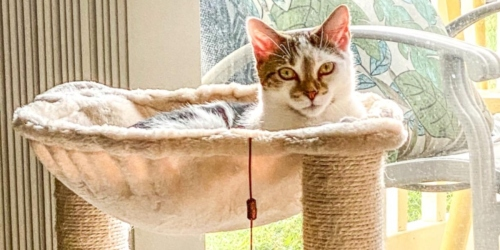 7 Best-Selling Cat Trees & Condos on Amazon Right Now