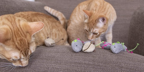 Plush Catnip Mice Cat Toys 6-Count Only $3 Shipped on Amazon