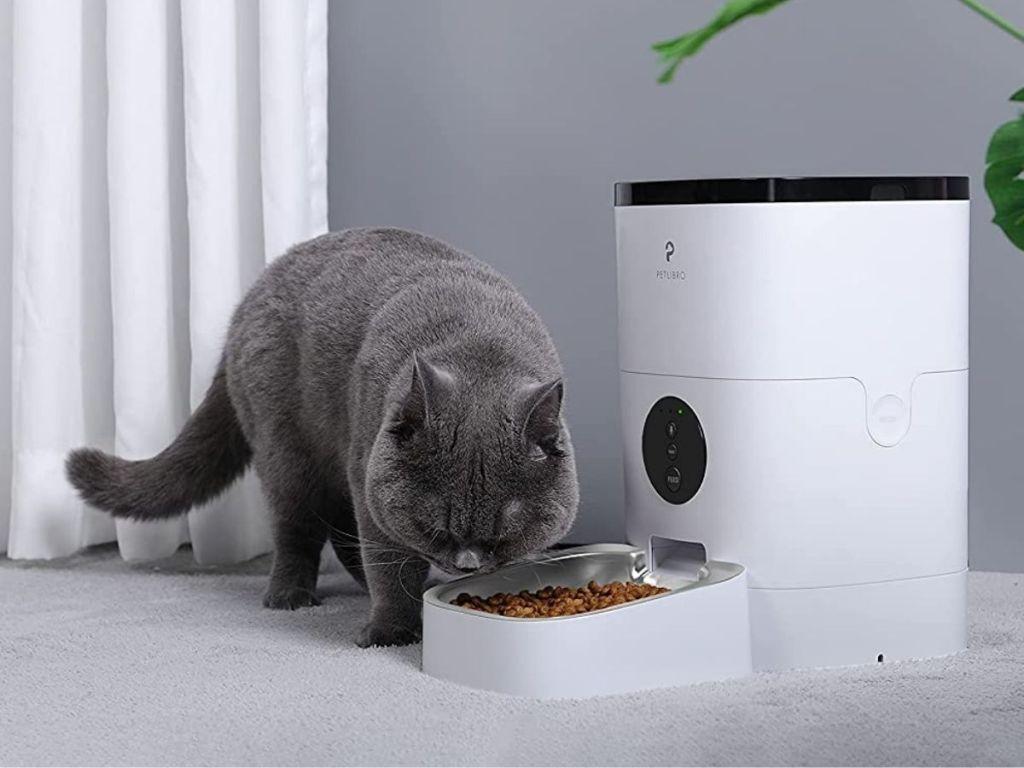 gray cat eating from white pet feeder