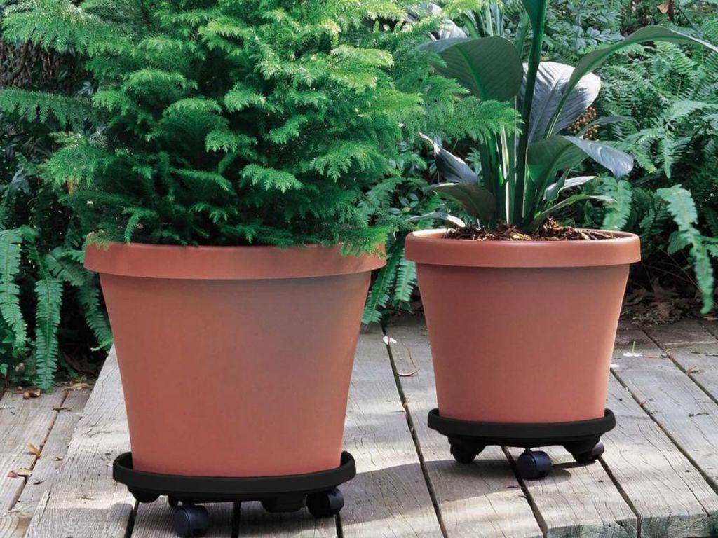 2 pots on wheels