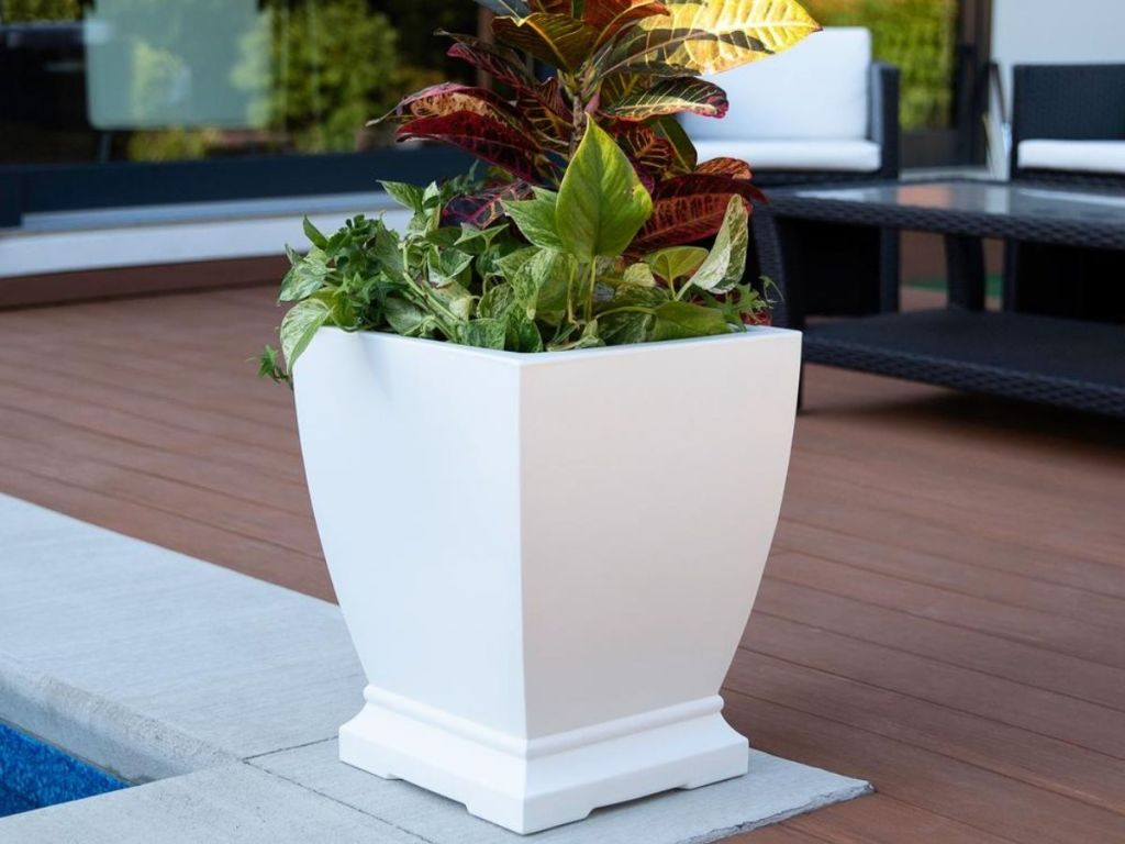 white potted plant