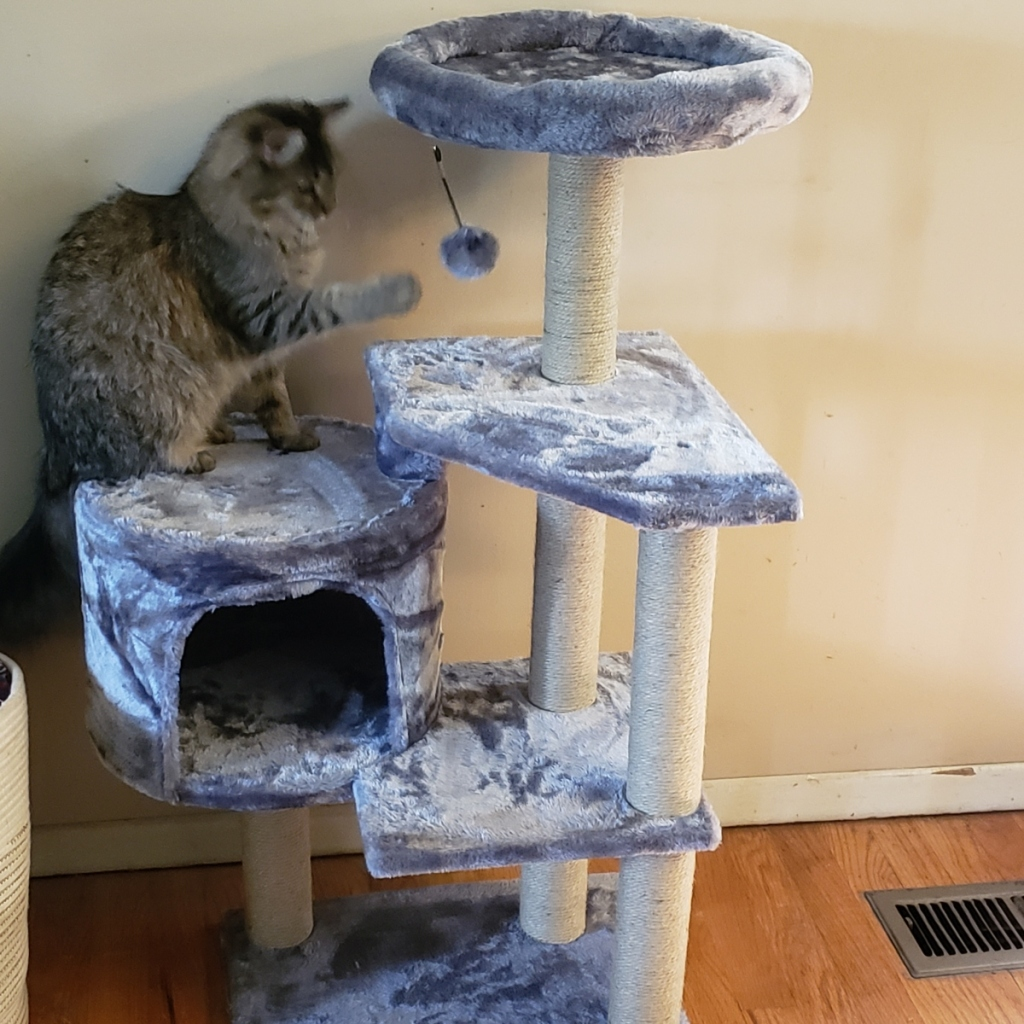 cat playing with toy attached to gray cat tree
