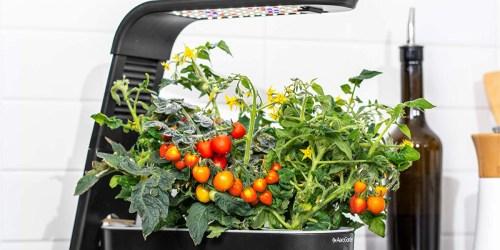 AeroGarden Sprout Indoor Garden Only $56.84 Shipped (Regularly $100)   Grow Veggies & Herbs Year-Round