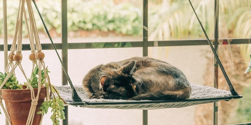 EZ Mount Window Cat Perch Only $12.52 Shipped on Chewy.com or Amazon (Regularly $29)