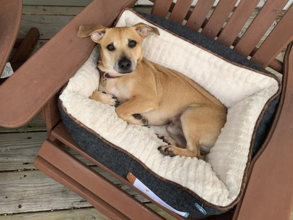 dog sitting in memory foam grey nester dog bed