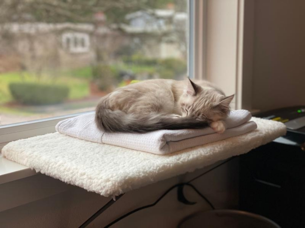 cat sleeping on you and me memory foam cat perch