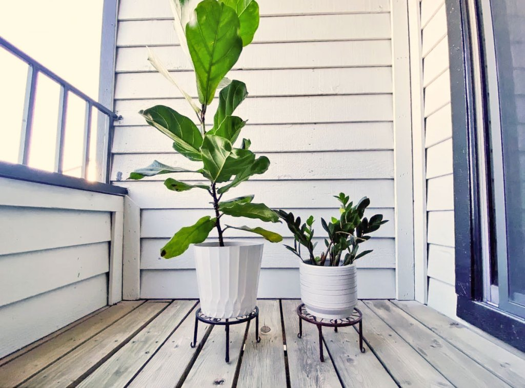 two plants on plant stands on balcony