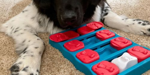 Outward Hound Dog Puzzle Game Only $9.48 on Amazon or Chewy.com (Regularly $25)