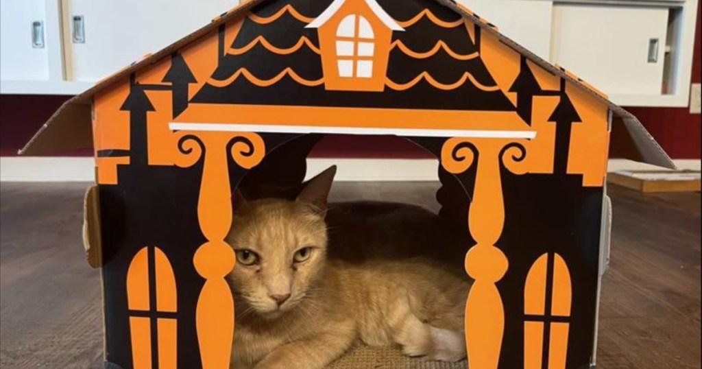cat in hyde & eek cat house