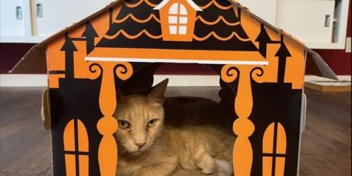 Hyde & Eek! Halloween Cat Scratchers from $10 on Target.com + Up to 50% Off More Pet Deals