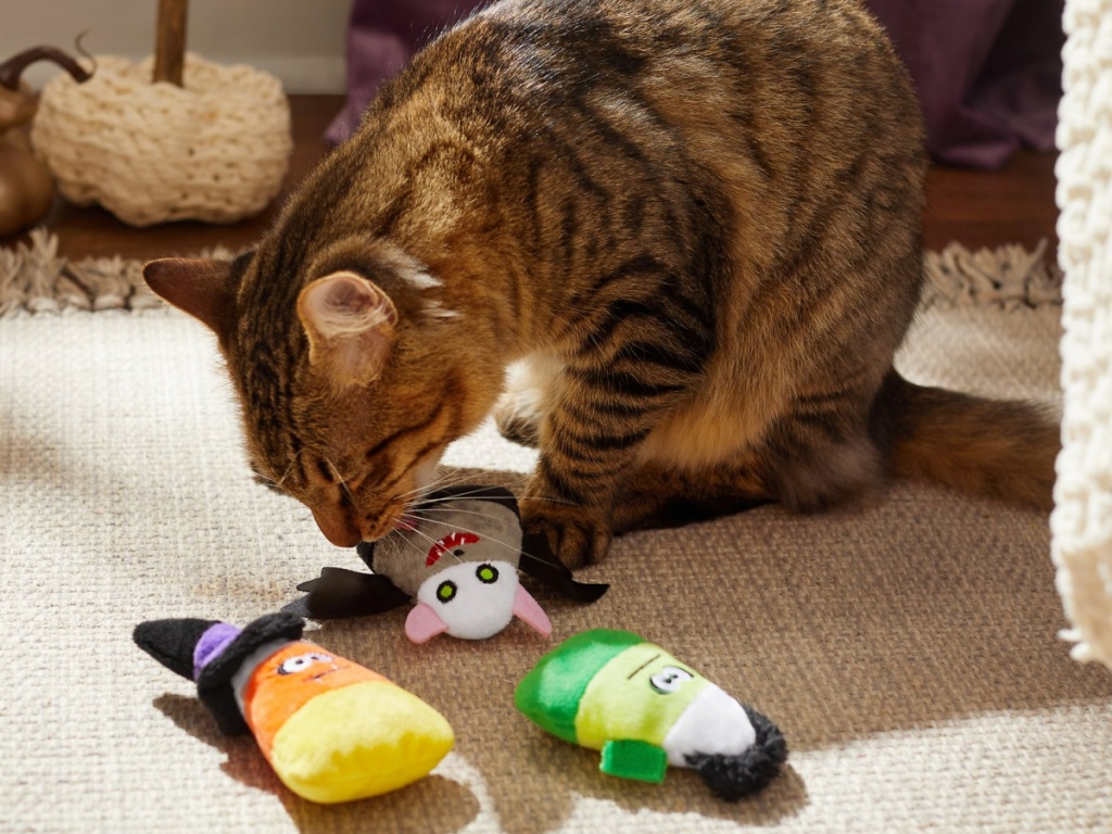 cat playing with plushy toys on ground