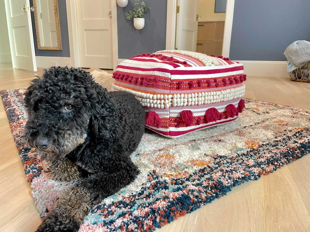 dog on area rug in bedroom